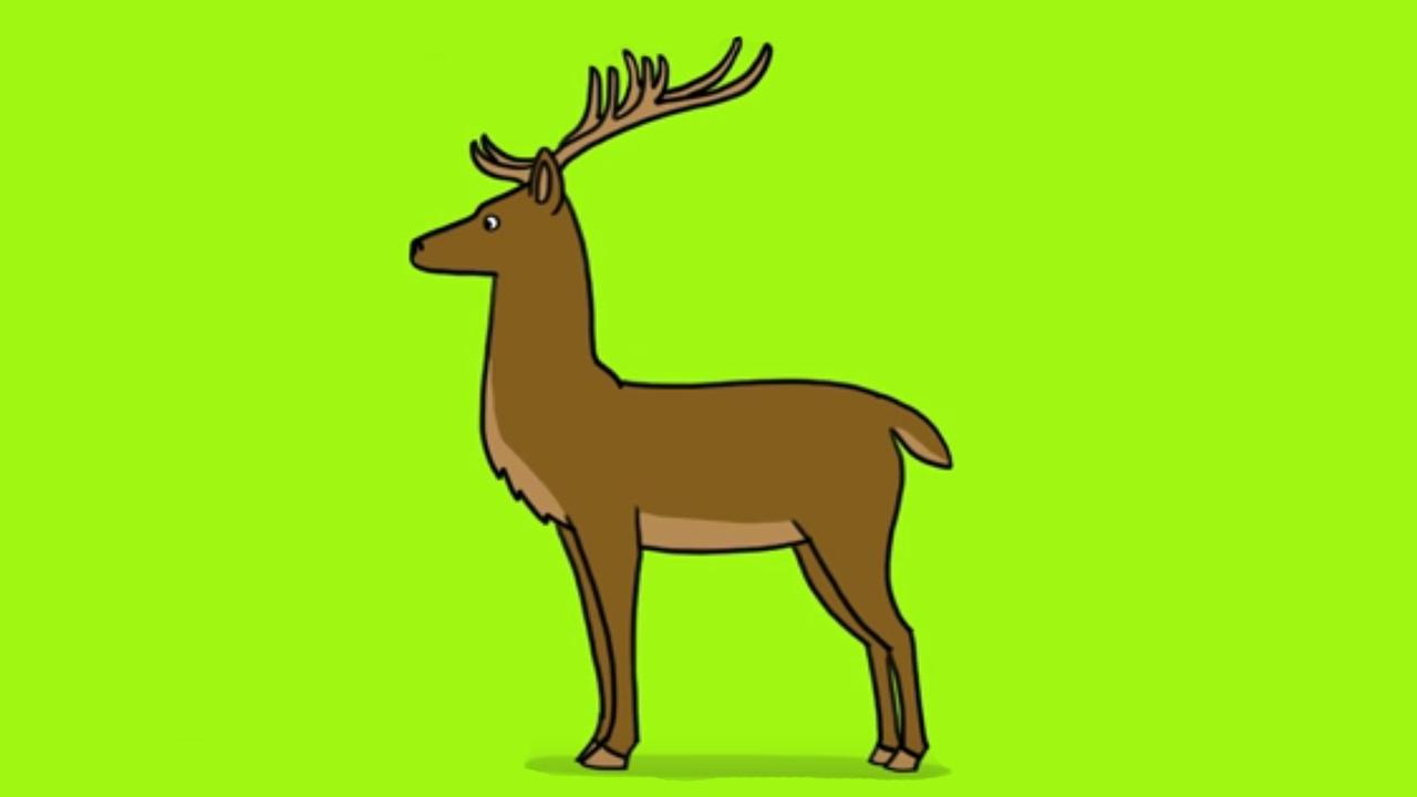 Comment dessiner un cerf et ses bois youtube - Dessin tete de cerf ...