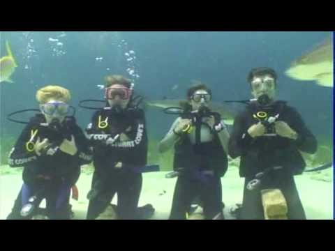 Moran Family Diving With Sharks