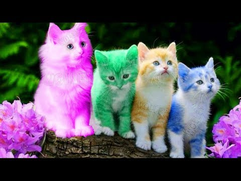 Cute Kitten Cat Colorful Learning Color Video For Kids - Funny Educational Videos For Kids Toddlers