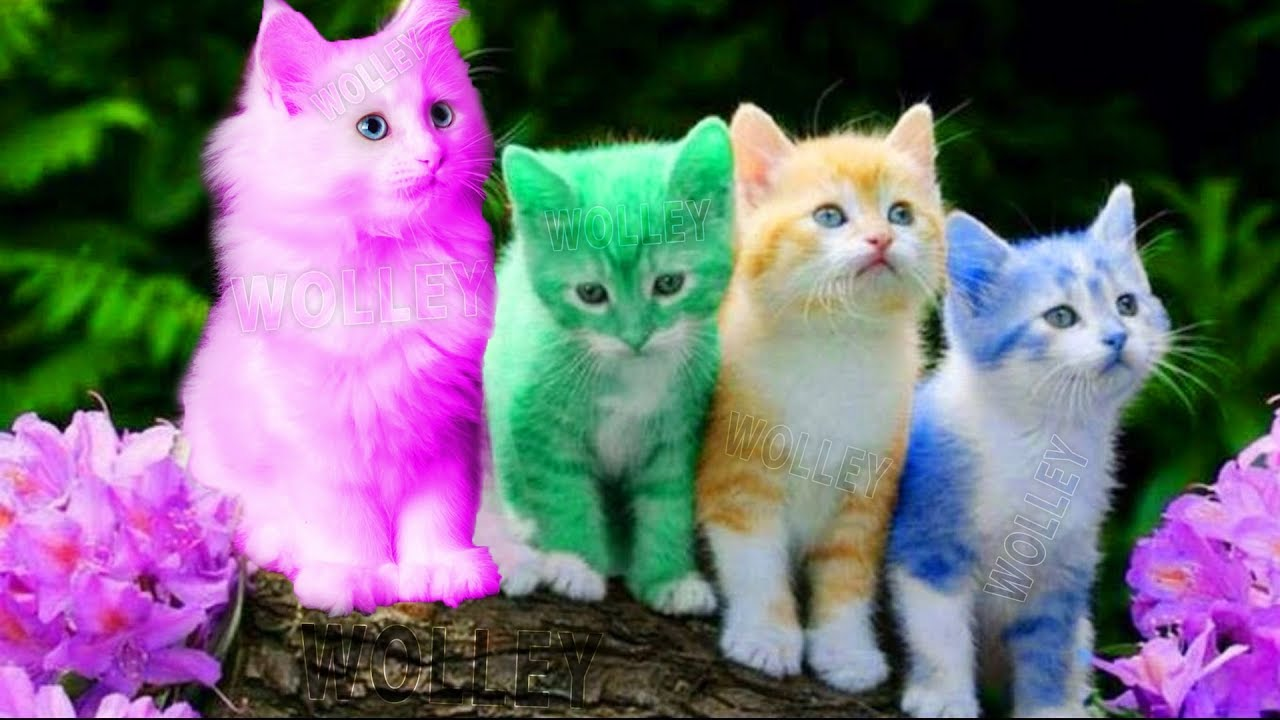 Cute Kitten Cat Colorful Learning Color Video For Kids