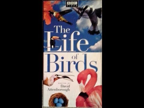 To The Life Of Birds:Volume 4 1998 VHS