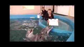 Дельфины предсказали победу России в хоккейном матче
