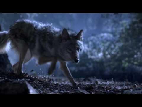 Волчонок 3 сезон 2 часть