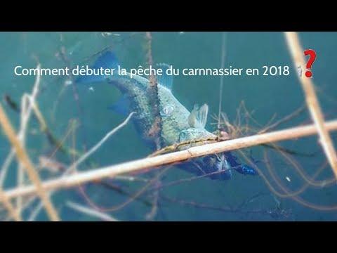 Comment Débuter La Pêche Du Carnassier En 2018 : LE MATÉRIEL #1