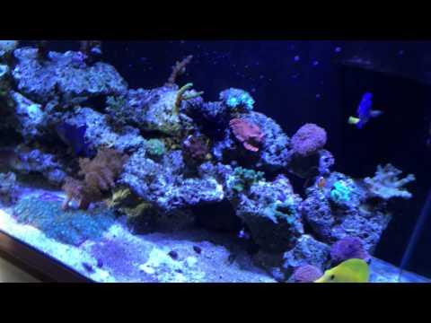 75 Gallon Salt Water Aquarium 6 months update. Anchorage Alaska