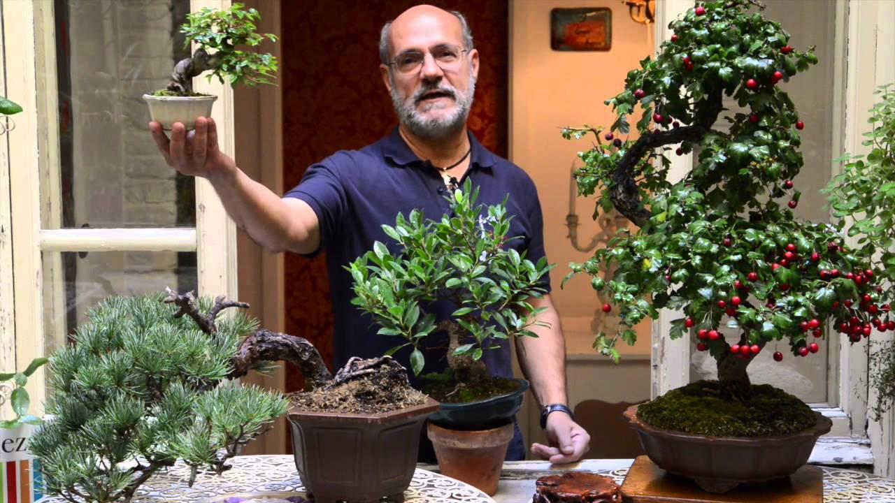 Curare Il Bonsai L Abc Per Neofiti Giardinieri Youtube