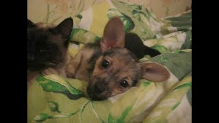 САМЫЕ ЛУЧШИЕ КЛИЧКИ ДЛЯ СОБАК Красивые имена для собак КАК НАЗВАТЬ СОБАКУ Имя для щенка