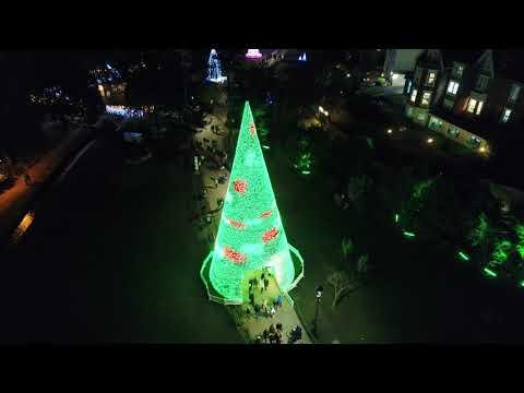 Christmas Tree Wonderland Bournemouth Coastal Bid.A Pint Why That S Very Nearly An Armful Blachere