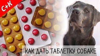 СПАСИБО ЗА ПОДПИСКУ! Как дать таблетку собаке.