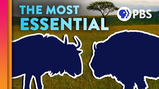 The Surprising Species That Everything Else Depends On | IN OUR NATURE