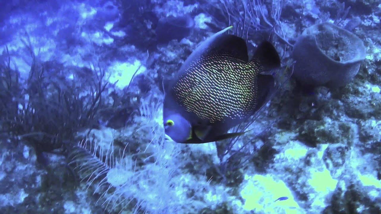 curacao unterwasser  youtube