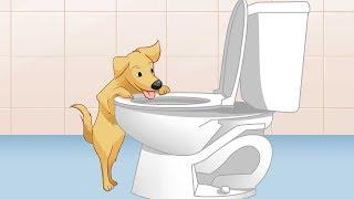 Mira lo que hace tu perro cuando nadie lo ve