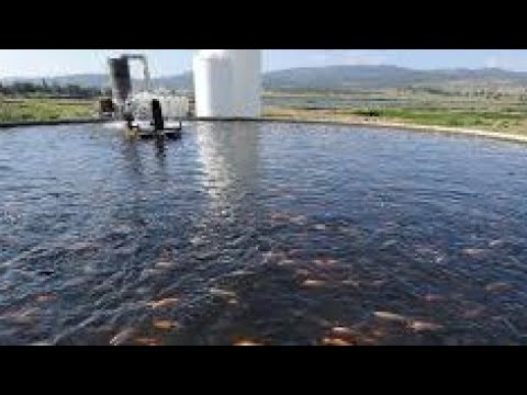 Big Fish Farm Business Philippines