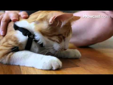 How to Teach a Cat to Walk on a Leash