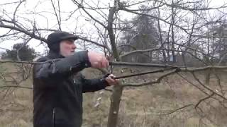 Jak przyciąć Jabłoń? How to prune an apple tree?