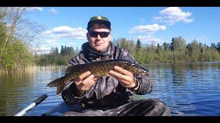 Ловля щуки на спиннинг Ловля щуки на живца Отчёт с рыбалки 24 мая 2020 года