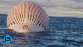 5 Benda Paling Aneh & Misterius yang Ditemukan di Laut !