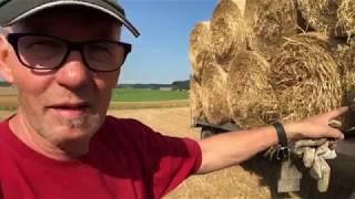 Getreide abgeben... weiter dreschen...Stroh einbringen