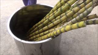 Sugar Cain Juice & Syrup Production