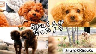 RasuくんがTaruちゃんに怒りました(๑°⌓°๑) でも、ふたりがより良い関係...