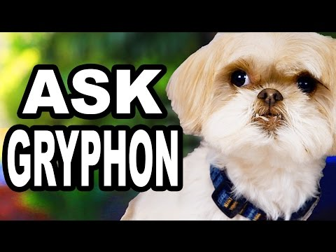 YOUR QUESTIONS ANSWERED (by Gryphon)