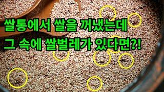 쌀통에서 쌀을 꺼냈는데 그 속에 쌀벌레가 있다면?!