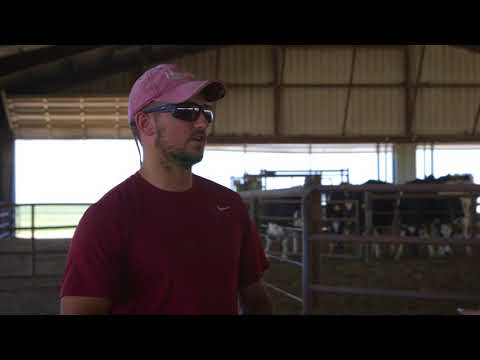 Caring for Cows at Natural Prairie Dairy