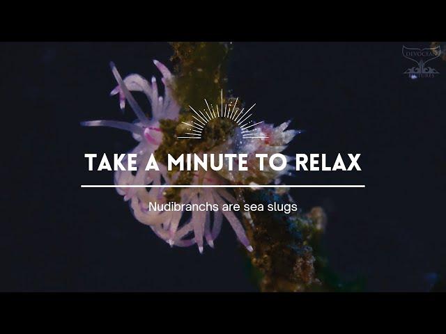 Take a Minute XXIX: Nudibranchs