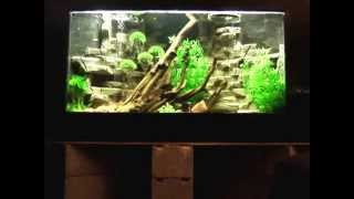 Plywood Corner Aquarium