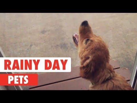 Rainy Day Pets