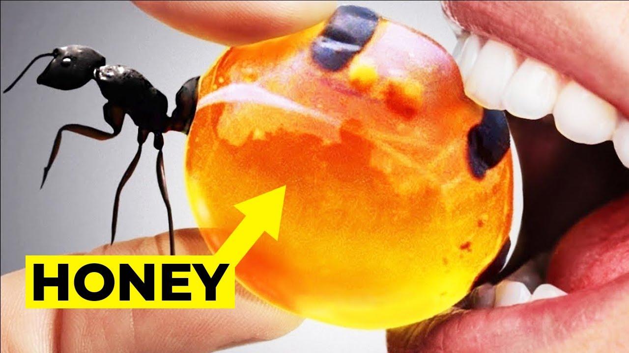 10 Insekto na Kinakain sa Ibat ibang panig ng Mundo