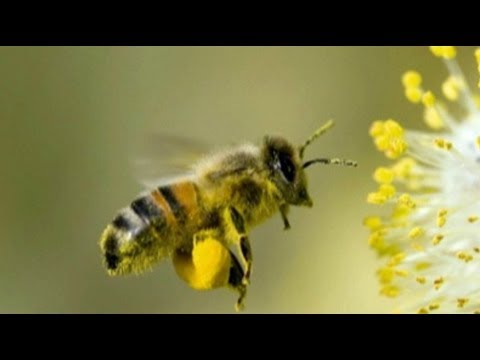 Killing Bees: Are Government and Industry Responsible?