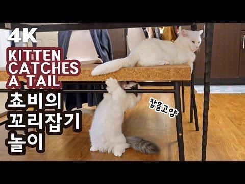 고양이 꼬리잡기 놀이 [4K] KITTEN CATCHES CAT S TAIL