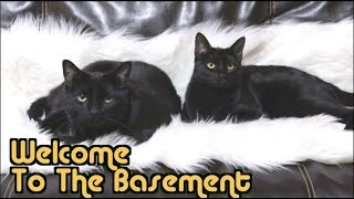 Cat People | Welcome To The Basement