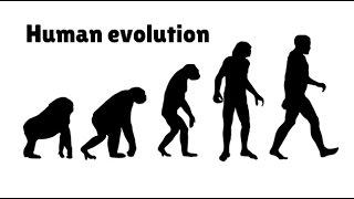 Timeline of Human Evolution