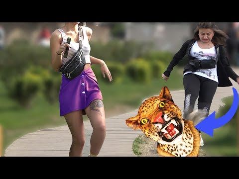 LEOPARD PRANK  2019 - AWESOME REACTIONS - Best of Just For Laughs