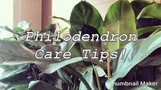 Philodendron Houseplant Care Tips & Propagation Explained