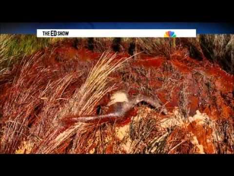 Ocean Pollution Affecting Marine Ecosystems