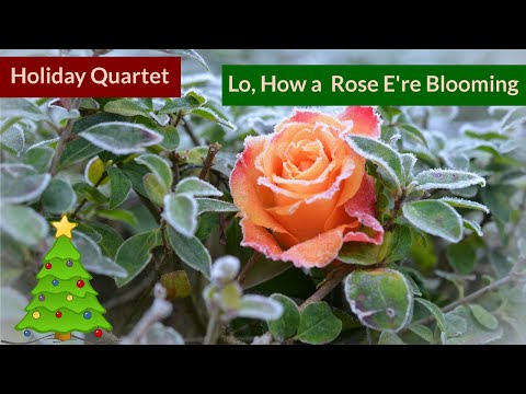 Lo, How A Rose E're Blooming - Christmas Native American Flute Quartet