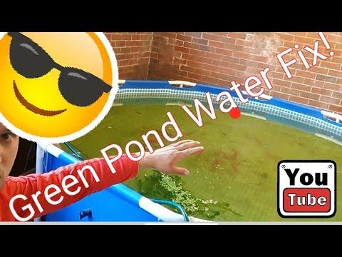 Green Pond Water Quick Fix!