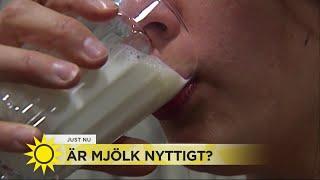 Är mjölk nyttigt? - Nyhetsmorgon (TV4)