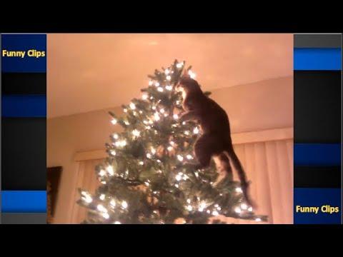 Funniest videos cats vs kittens to climb into Christmas tree  Funny cat videos