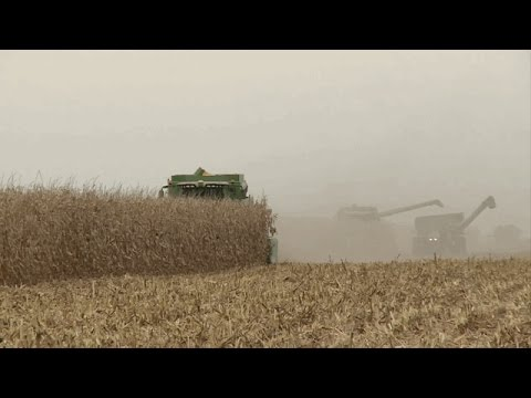 Grain Market Analysis - Elaine Kub - April 7, 2017