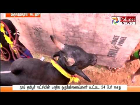 Jallikattu conducted in Cuddalore inspite of Supreme Court  ban | Polimer News