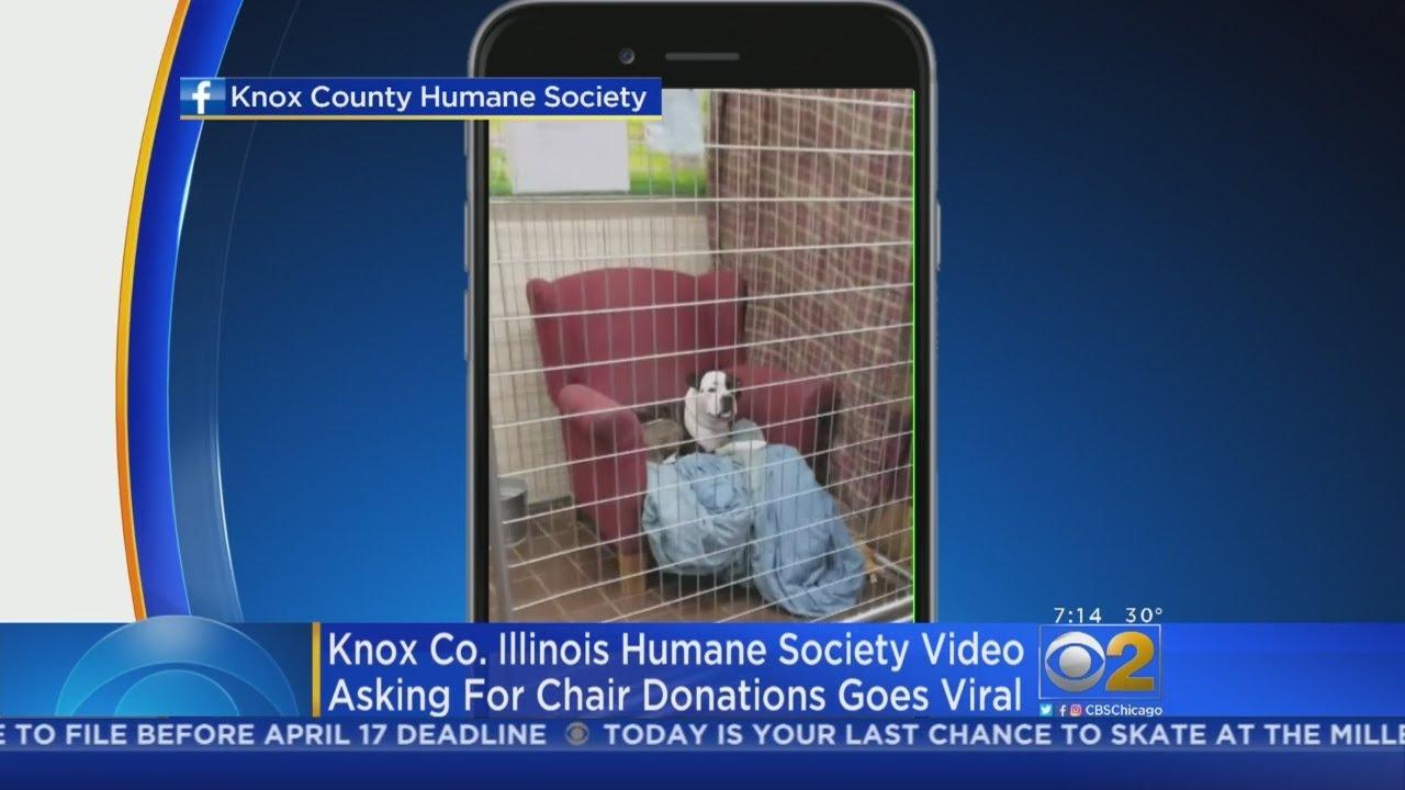Illinois Animal Shelter Videos Go Viral