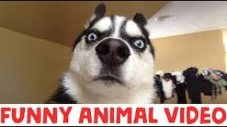 WATCH and TRY TO STOP LAUGHING - Super FUNNY VIDEOS compilation funny and cute animals