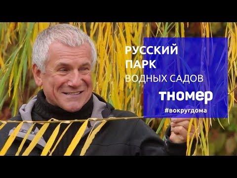 Крупнейшая коллекция ив и кувшинок Александра Марченко. Русский Парк Водных Садов   #ВокругДома