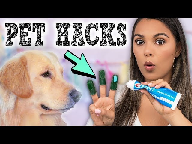 DIY Pet Hacks & Gadgets Put to the Test! Useful Inventions for your Dogs!