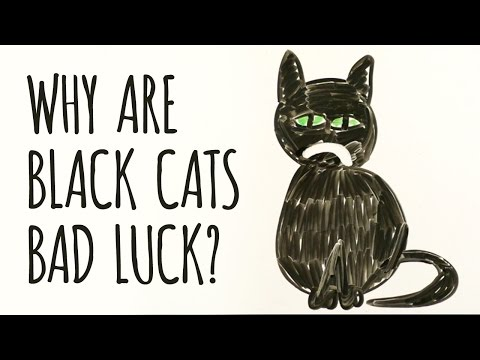 What's Wrong With Black Cats?