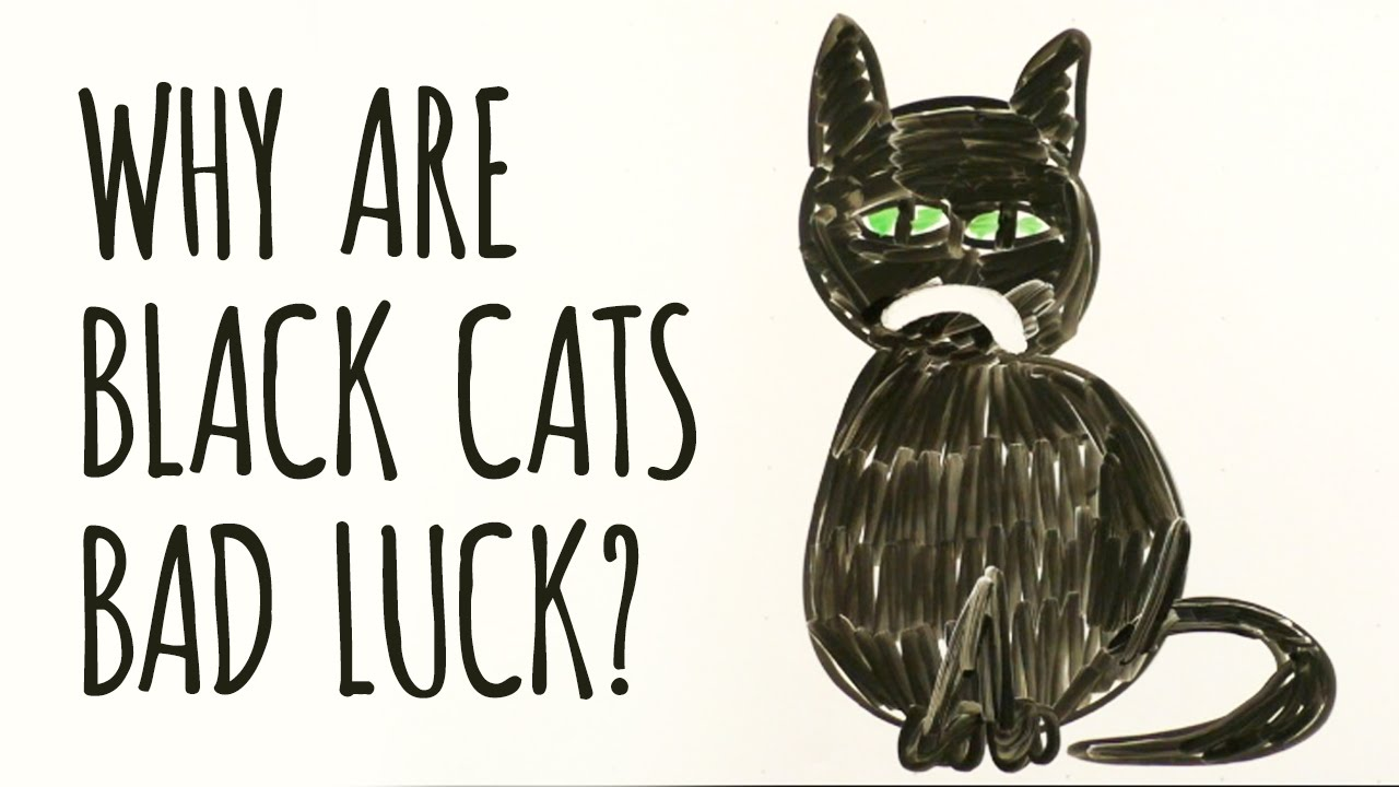 Why Are Black Cats Considered Bad Luck Youtube